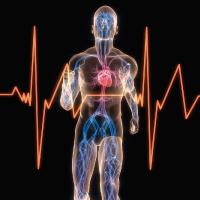 Peripheral-Vascular-Studies Non Invasive Cardiology