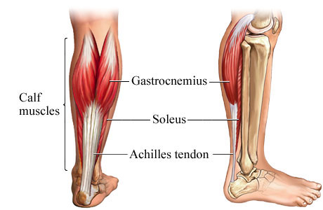 calf-muscles Podiatrist