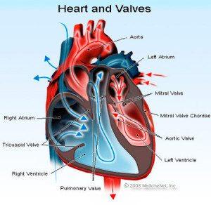 heart doctors near me